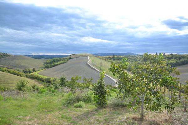 Landschap Toscane